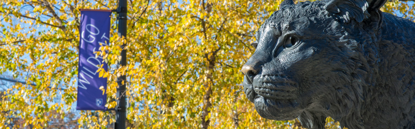 Wildcat statue looking from right