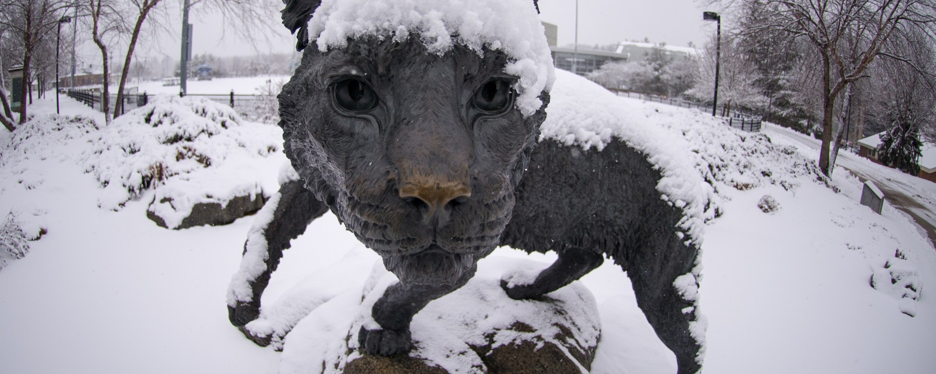 Wildcat statue covered in snow